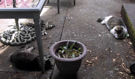 Cats on the back patio.